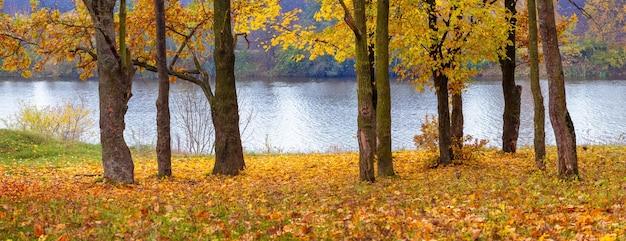 Alberi con foglie autunnali gialle vicino al fiume, foglie cadute vicino agli alberi sull'erba