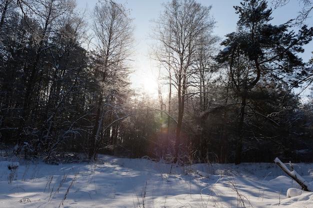 Alberi senza fogliame in inverno