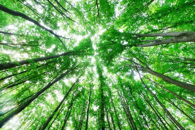 Vista dall'alto dal basso. alberi della foresta.