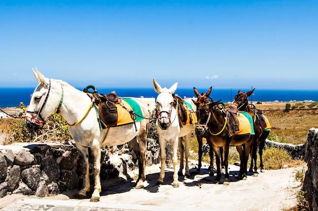 Trekking cavalli e asini. consegna della montagna.