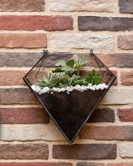 Terrario triangolare in vetro a parete
