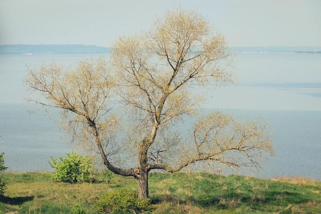 Tridente, albero a forma di croce senza foglie sullo sfondo del fiume azzurro al mattino e all'inizio della primavera