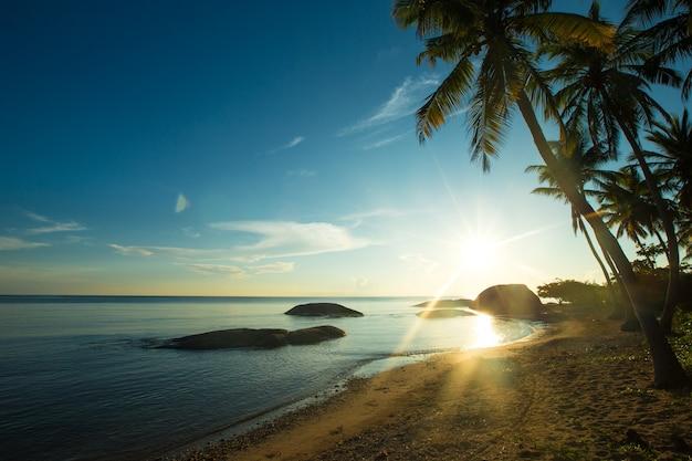 Spiaggia tropicale tra palme e laguna blu