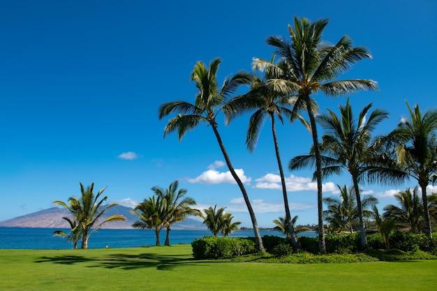 Spiaggia tropicale scena vista mare dalla spiaggia estiva con cielo paesaggio costiero palme da cocco