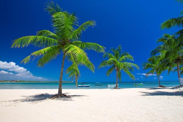 Spiaggia tropicale in sri lanka