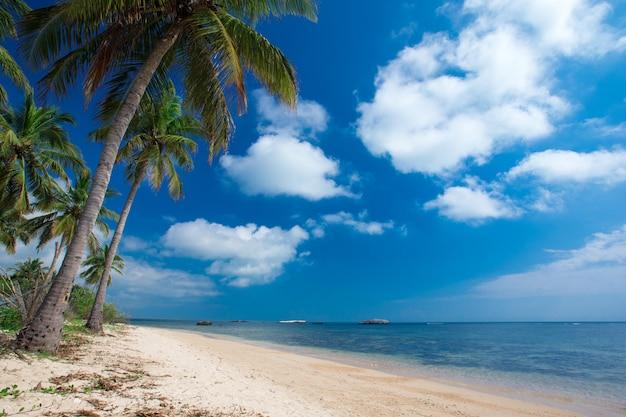 Spiaggia tropicale in sri lanka.