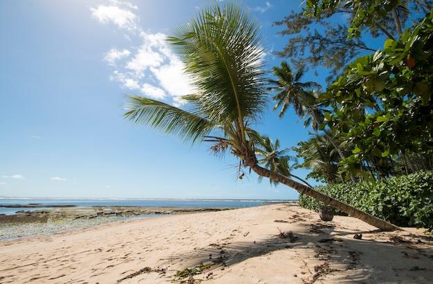 Spiaggia tropicale con palme da cocco sull'isola di boipeba a bahia brasile.
