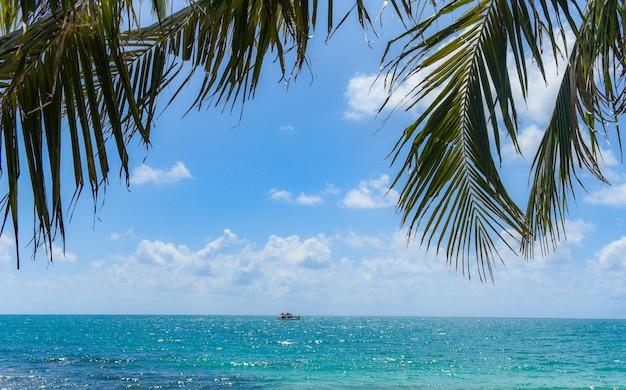 Palma tropicale della foglia di noce di cocco sulla spiaggia con la luce del sole sul cielo blu nuvola del mare e dell'oceano e barca turistica