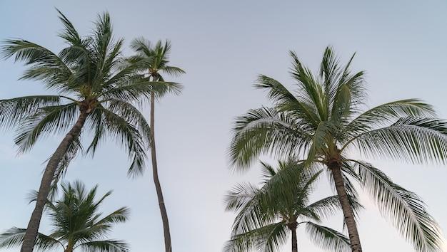 Palme da cocco tropicali contro cielo blu e luce solare.