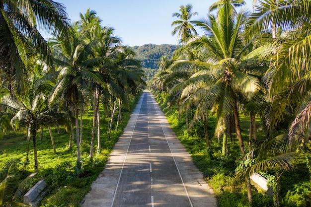 Foresta tropicale di alberi di cocco