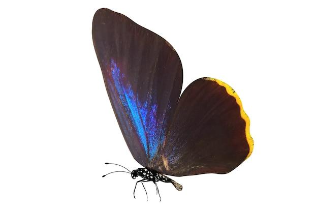 Farfalla colorata tropicale isolato su sfondo bianco