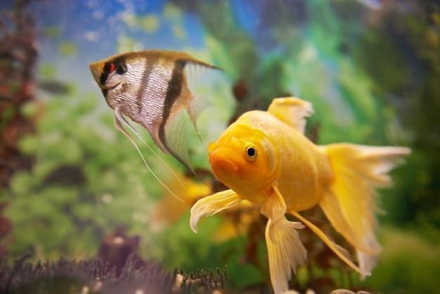 Pesci colorati tropicali che nuotano in acquario con piante