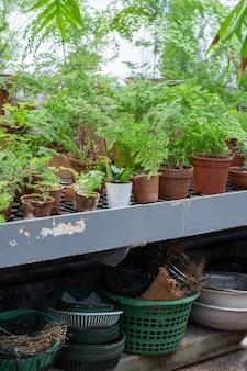 Varie felci tropicali sempreverdi, piante in vaso da fiori di terracotta in serra