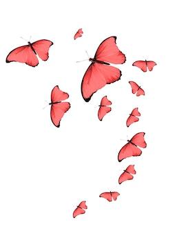 Stormo tropicale di farfalle colorate volanti isolate su bianco