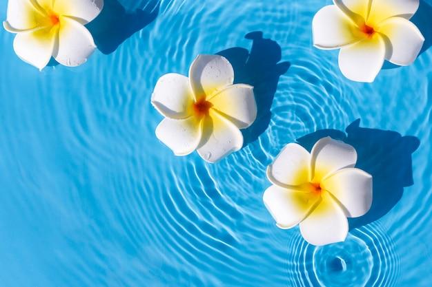 Fiori tropicali su uno sfondo di acqua blu. vista dall'alto, piatto.