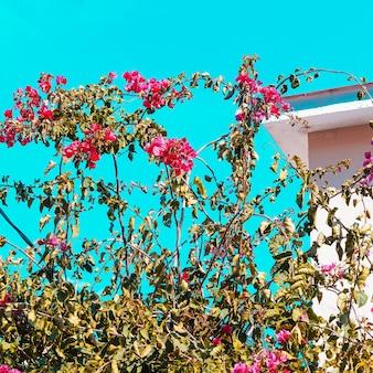 Fiori tropicali. amante del giardino. fiore canarino alla moda