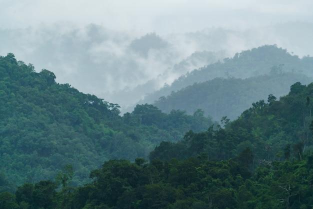 Paesaggio della foresta tropicale con nebbia e foschia