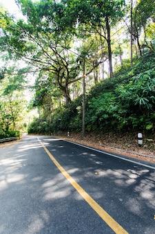 Foresta tropicale con strada. bel posto. vista degli alberi sottostanti