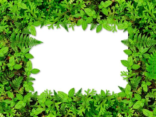 Cornice tropicale con foglie