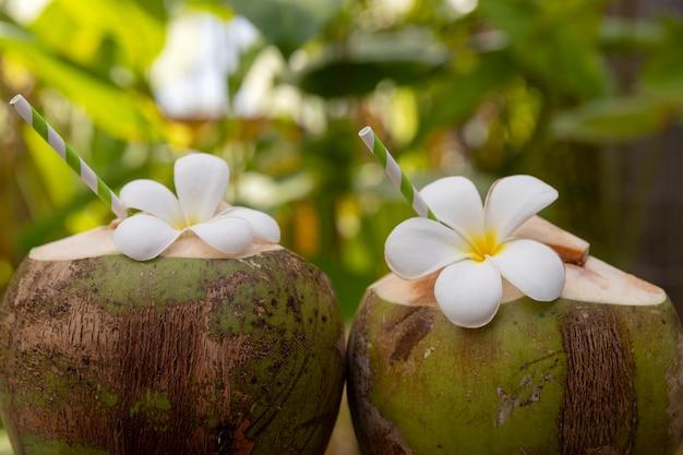 I cocktail freschi tropicali della noce di cocco hanno decorato il fiore di plumeria all'aperto