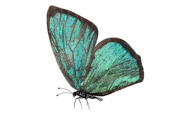 Farfalla verde tropicale isolata su bianco