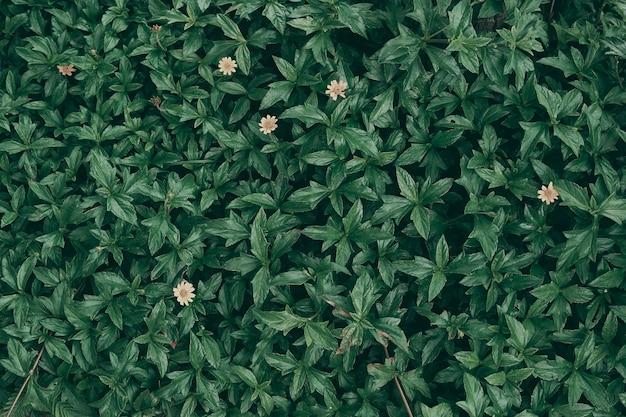 Sfondo verde foglia tropicale, tema tono scuro.