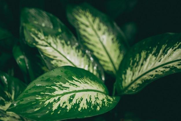 Pianta tropicale a foglia verde per lo sfondo della natura, giardino botanico di crescita del fogliame con piccolo albero nella giungla, motivo di foresta di palme in primavera, concetto di decorazione all'aperto di caffè naturale