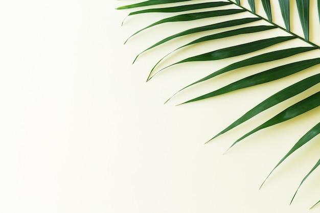 Vista dall'alto del ramo di foglia di palma verde tropicale su sfondo giallo chiaro