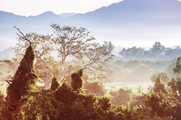 Giungla tropicale all'alba in messico