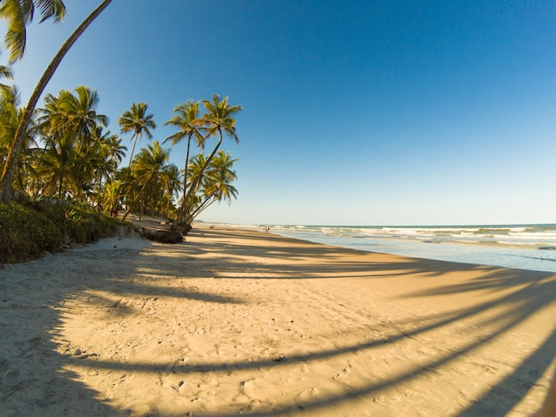 Paesaggio tropicale con spiaggia con palme da cocco al tramonto.