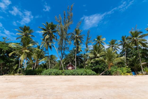 Paesaggio tropicale con spiaggia di palme da cocco sull'isola di boipeba bahia brasile.