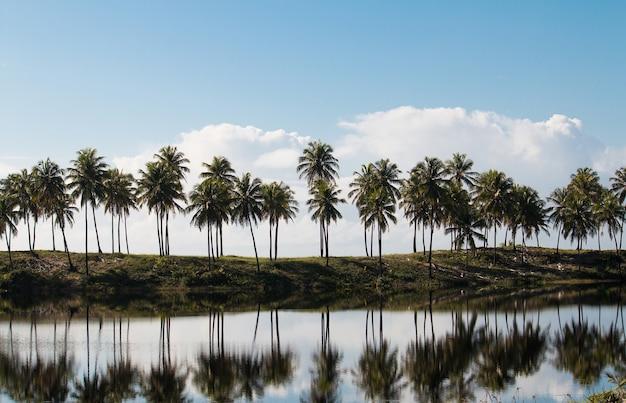 Paesaggio tropicale con alberi di cocco che riflettono nel lago.