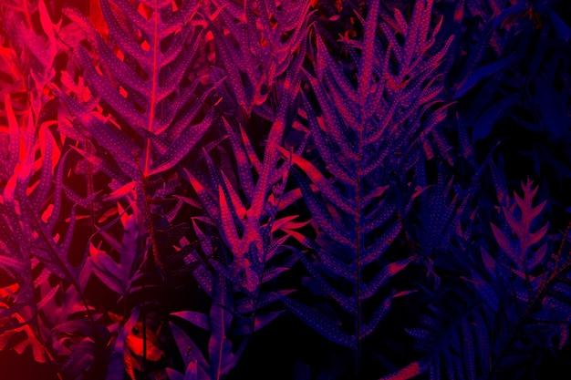 Foresta di foglie tropicali bagliore sullo sfondo di luce nera. alto contrasto.