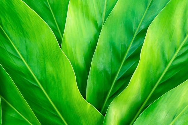 Foglia tropicale, fondo delle foglie verdi