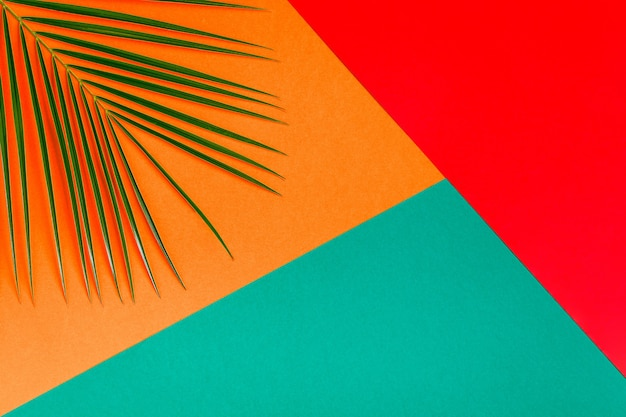 Foglia tropicale sul concetto minimalista sfondo pastello