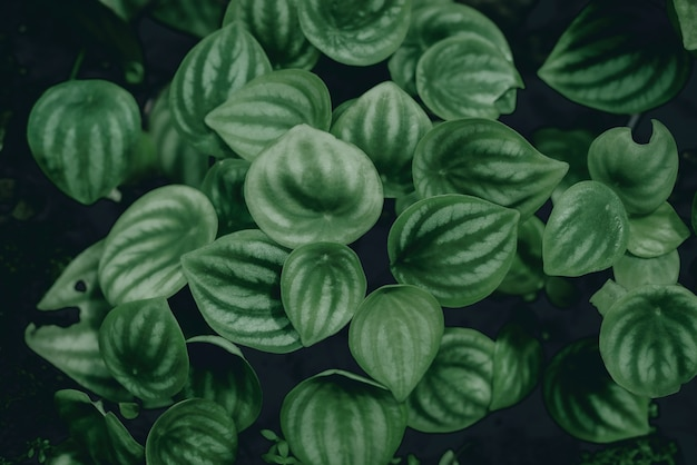 Foglie tropicali foglie verdi astratte texture natura sfondo