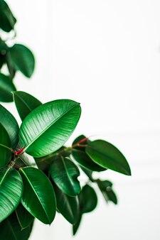 Foglie tropicali come sfondo naturale e ambientale giardino botanico e sfondo floreale pianta gr...