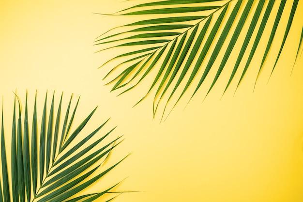 Sfondo di foglie tropicali, foglie di palma, foglie di monstera isolate su sfondo giallo brillante, vista dall'alto, piatto, concetto di design estivo sopraelevato.