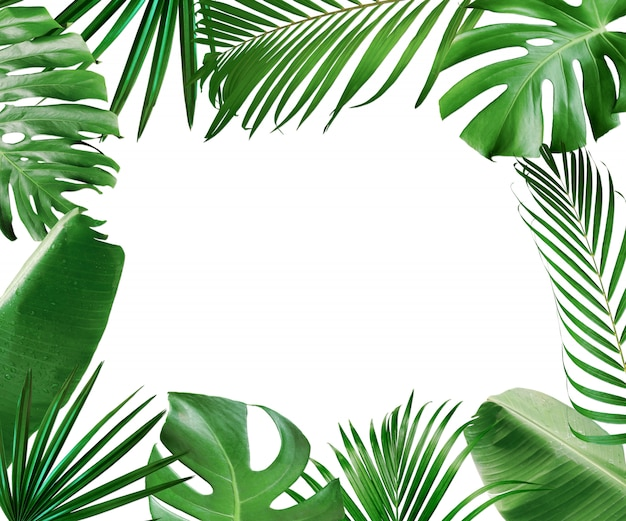 Blocco per grafici tropicale del fogliame dei fogli isolato su bianco