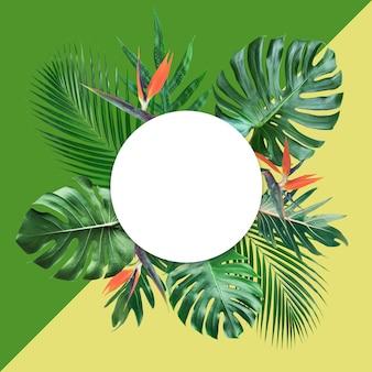 Foglie tropicali con spazio bianco della copia e sfondo color pastello.