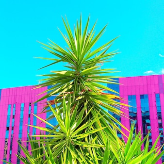 Posizione tropicale. palme e urbano. arte minimale