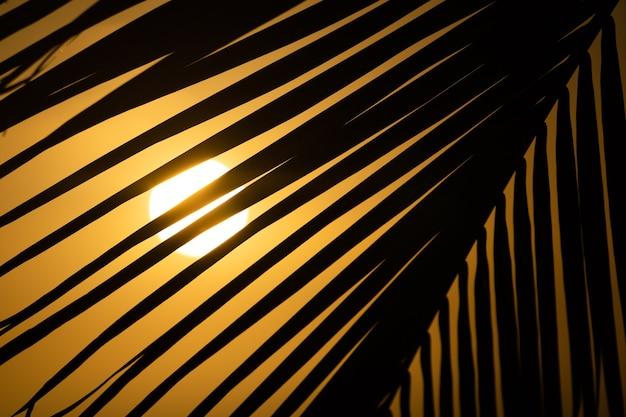 Tramonto arancione tropicale dietro la sagoma di una grande foglia di palma ampia bandiera tropicale sfondo