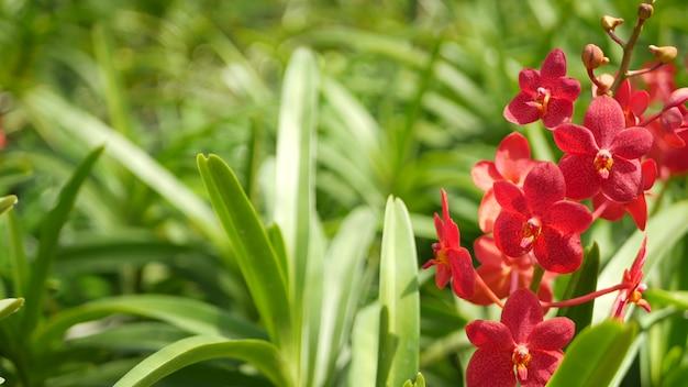 Fiore di orchidea tropicale nel giardino di primavera, fogliame lussureggiante. fiore e foglie floreali esotici naturali