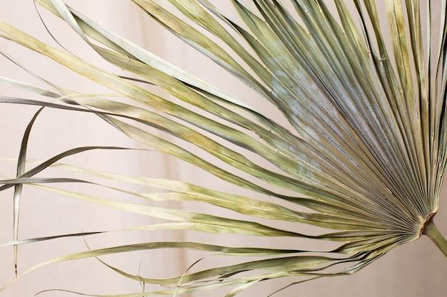 Foglie secche di palma tropicale sulla vista laterale di sfondo tessuto di cotone naturale
