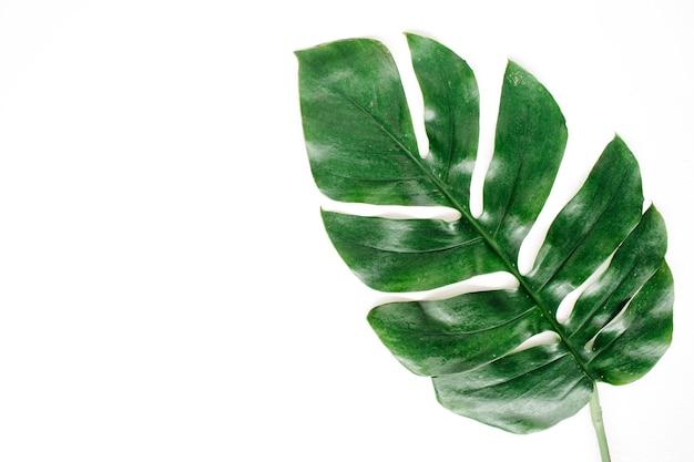 Foglia di palma tropicale