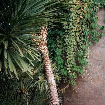 Foglie di palma tropicali e sfondo di fogliame verde lussureggiante di vite rampicante