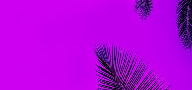 Foglie di palma tropicale su uno sfondo viola scuro. panorama, banner, modello per il testo.