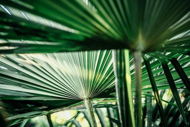 La palma tropicale lascia il fondo verde lussureggiante della spiaggia di estate del fondo del fogliame