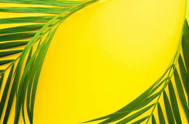 Foglie di palma tropicale su sfondo di colore pastello.foglia della giungla close up.natura botanica concetti.elementi floreali design, fogliame verde