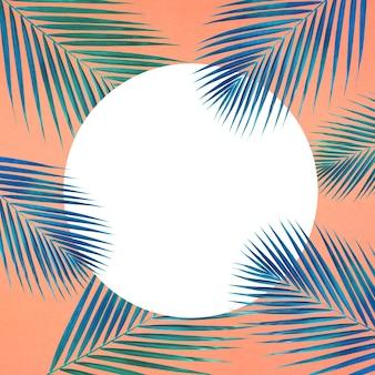 Modello di foglie di palma tropicale con spazio bianco copia su sfondo di colore pastello.